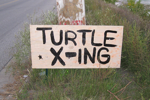 Watch out: Turtle Crossing!