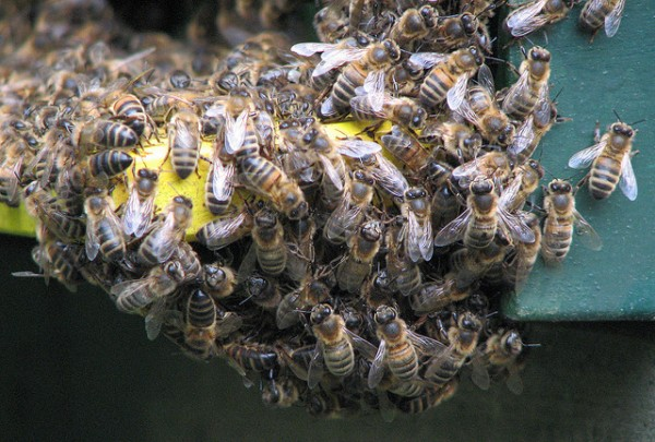 This week: bees on a plane, a new airport invention & Ashton Kutcher