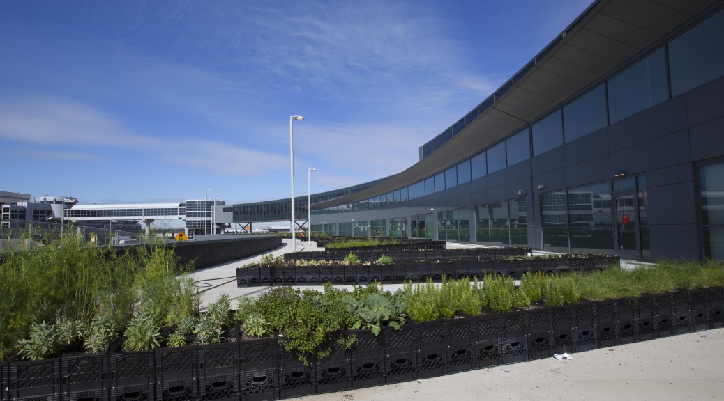 Jet Blue's new garden at JFK